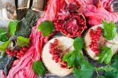 Bayas maduras del viburnum en una rama con las hojas Foto de archivo libre de regalías
