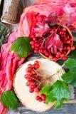 Bayas maduras del viburnum en una rama con las hojas Fotos de archivo