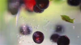Bayas mezcladas que caen abajo en agua almacen de video