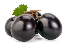 Bayas negras de las uvas Imagenes de archivo