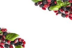 Bayas negras y rojas aisladas en blanco Zarzamoras, frambuesas, cornels y hojas maduros de la albahaca en el fondo blanco Bayas e Fotografía de archivo libre de regalías