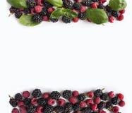 Bayas negras y rojas aisladas en blanco Zarzamoras, frambuesas y hojas maduras de la albahaca en el fondo blanco Azufaifas dulces Fotos de archivo libres de regalías