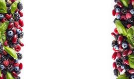 bayas Negro-azules y rojas aisladas en blanco Zarzamoras, arándanos, frambuesas, cornels y hojas maduros de la albahaca en el bac Imagen de archivo libre de regalías