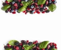 bayas Negro-azules y rojas aisladas en blanco Zarzamoras, arándanos, frambuesas, cornels y hojas maduros de la albahaca en el bac Fotos de archivo