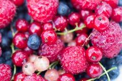 Bayas orgánicas frescas frambuesas, arándanos, pasas rojas imagen de archivo libre de regalías