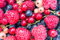 Bayas orgánicas frescas frambuesas, arándanos, pasas rojas imagen de archivo
