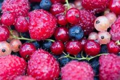 Bayas orgánicas frescas frambuesas, arándanos, pasas rojas fotografía de archivo libre de regalías