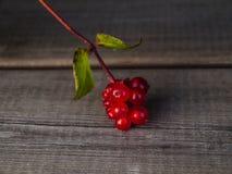 Bayas rojas Fotografía de archivo libre de regalías