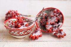 Bayas rojas cubiertas con nieve en taza modelada brillante Imagen de archivo libre de regalías