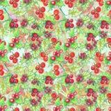 Bayas rojas del acebo Imágenes de archivo libres de regalías