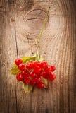 Bayas rojas del viburnum en la tabla de madera Imagen de archivo
