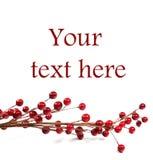 Bayas rojas - ornamentos de la Navidad o del Año Nuevo Imagen de archivo