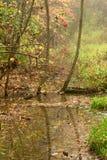 Bayas rojas sobre pantano fotos de archivo