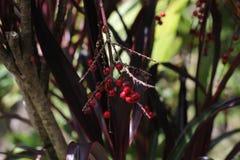 Bayas tropicales Fotografía de archivo libre de regalías