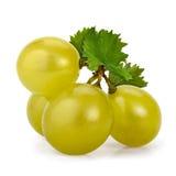 Bayas verdes de las uvas Imágenes de archivo libres de regalías