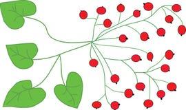 Bayas y hojas rojas del verde Fotografía de archivo