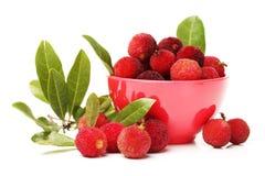 Bayberry vermelho Imagens de Stock