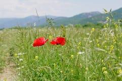 Весна в долине Baydarsky, Крыме Стоковые Изображения RF