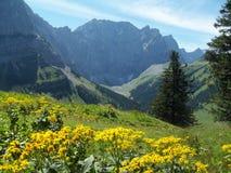 Bayerische Alpenlandschaftsgrenze mit Österreich lizenzfreie stockfotos