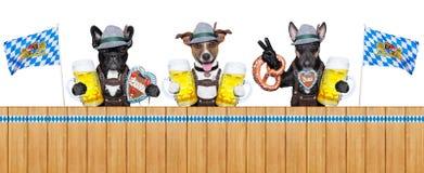 Bayerische Hunde stockbilder