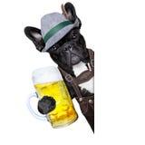 Bayerischer Bierhund Lizenzfreies Stockfoto