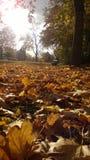 Bayerischer Herbst Stockfotografie