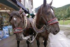 Bayerischer Pferdewagen Stockfoto