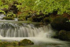 Bayerischer Wald Stockfotografie