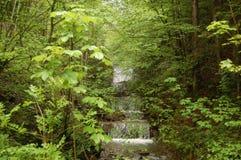 Bayern för Tegernsee skogvattenfall Tyskland Arkivfoton