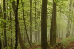 Bayern Tyskland Tegernsee Fotografering för Bildbyråer