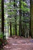 Bayersk skog arkivfoton
