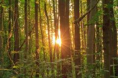 Bayersk sommar Forrest Arkivfoto