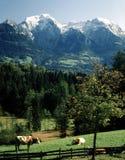 Bayerska Alps Arkivbild