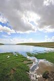 Bayinbuluke grassland and Swan lake in summer Royalty Free Stock Image