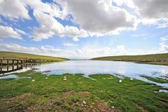 Bayinbuluke grassland and Swan lake in summer Royalty Free Stock Photography