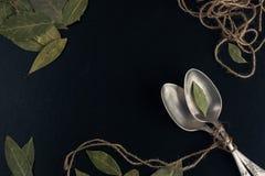 Bayleaf на серебряной ложке Стоковая Фотография RF
