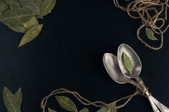 Bayleaf on a silver spoon Royalty Free Stock Photography