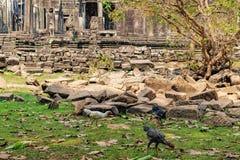 Bayon świątynia w Angkor Thom kompleksie, Kambodża obraz royalty free