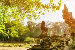 在古老Bayon寺庙附近的绿色树在吴哥城,柬埔寨 库存照片