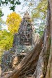 Bayon temple. Big tree in front of Bayon temple : Seamreab : Cambodia Stock Photos