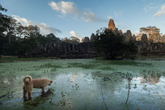 Bayon temple and dog Royalty Free Stock Photo