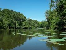 bayou Λουιζιάνα Στοκ Φωτογραφία