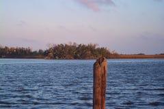 bayou Λουιζιάνα Στοκ Εικόνες