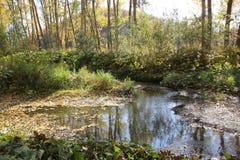 Bayou που καλύπτεται με τα πεσμένα φύλλα Στοκ Εικόνες