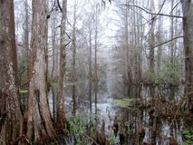 Bayou. Beautiful bayou in the winter stock images