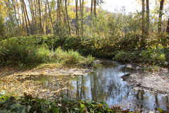 Bayou covered with fallen leaves Stock Images