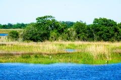 Bayou de la Louisiane photos libres de droits