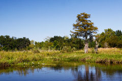 Bayou - Horizontal Landscape Royalty Free Stock Photography