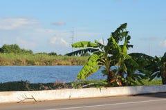 Bayou Lafourche, Λουιζιάνα στοκ φωτογραφίες με δικαίωμα ελεύθερης χρήσης