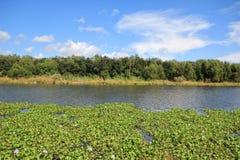 Bayou Lafourche, Λουιζιάνα στοκ εικόνα